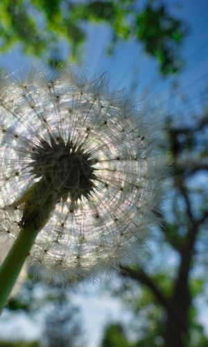 Pflanze_08